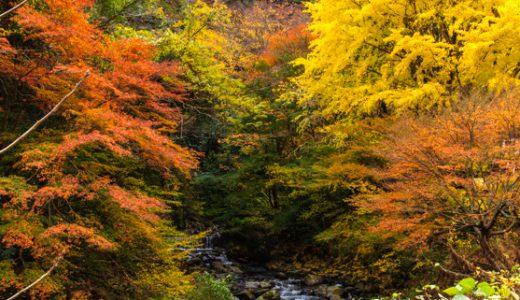 秋は湯河原が一番美しい季節♪紅葉の見どころは割と身近な場所にありますよ~
