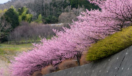 スポーツだけじゃない、2月から桜を楽しめる「ゆめ公園」で長い春を満喫