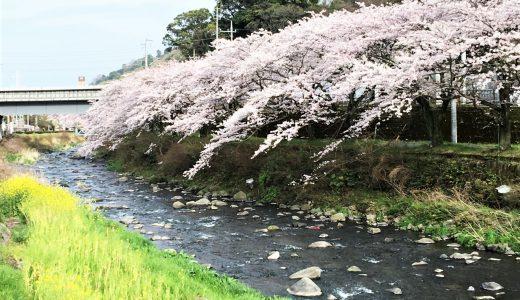 千歳川沿い桜ライトアップ3月21日(土)から4月上旬の18:00~22:00