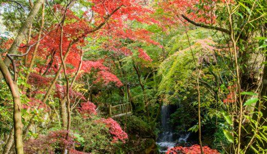 湯河原の紅葉が見頃を迎えましたよ♪