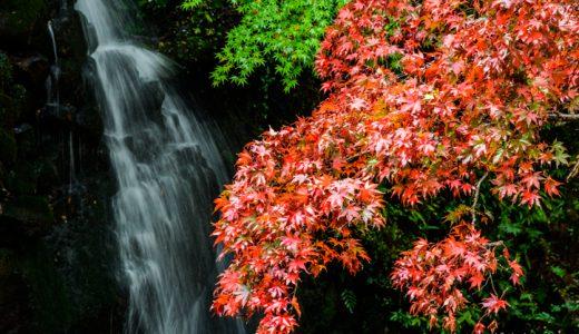 日本で一番遅い秋を湯河原で満喫!紅葉見頃はじまりました♪